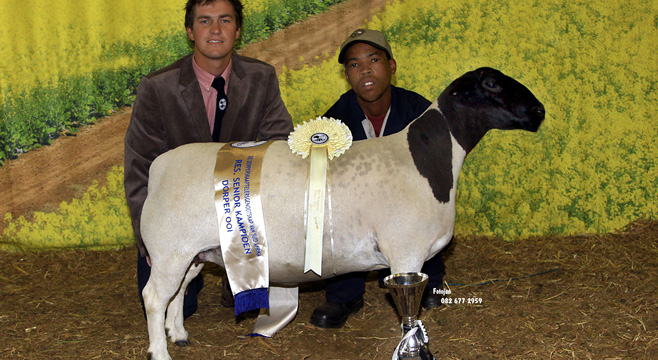 Reserve-World-Champion-Ewe-2014